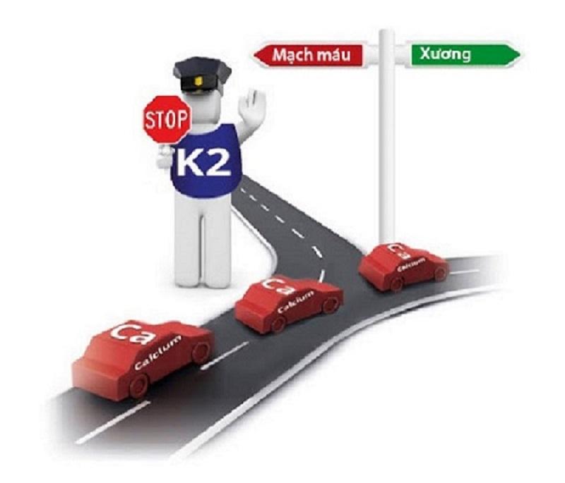 Vitamin K2 giúp canxi gắn vào xương hiệu quả