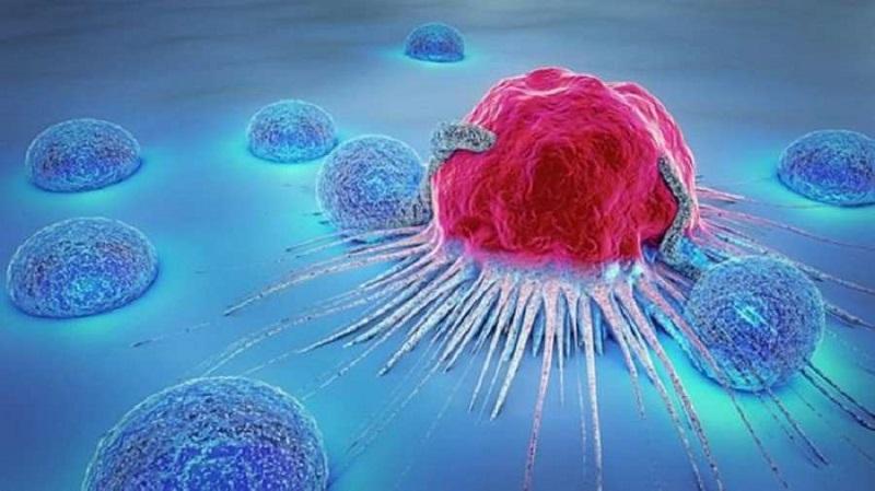 Vitamin K2 giúp phòng ngừa và hỗ trợ điều trị bệnh ung thư
