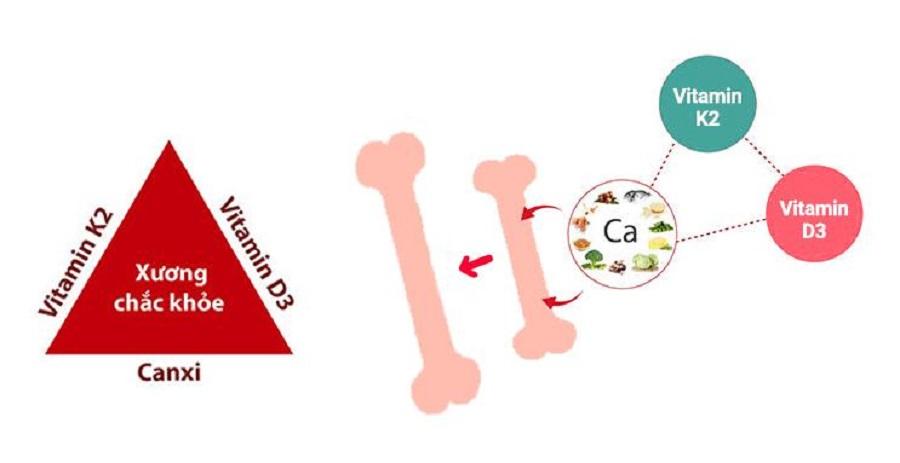 Canxi, vitamin D và vitamin k2 là 3 nguyên tố quan trọng nhất trong phát triển xương và hỗ trợ tăng chiều cao hiệu quả
