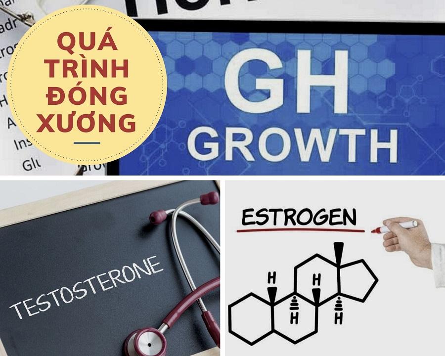 3 hormon quan trọng tác động tới quá trình đóng xương gồm: GH, estrogen và androgen