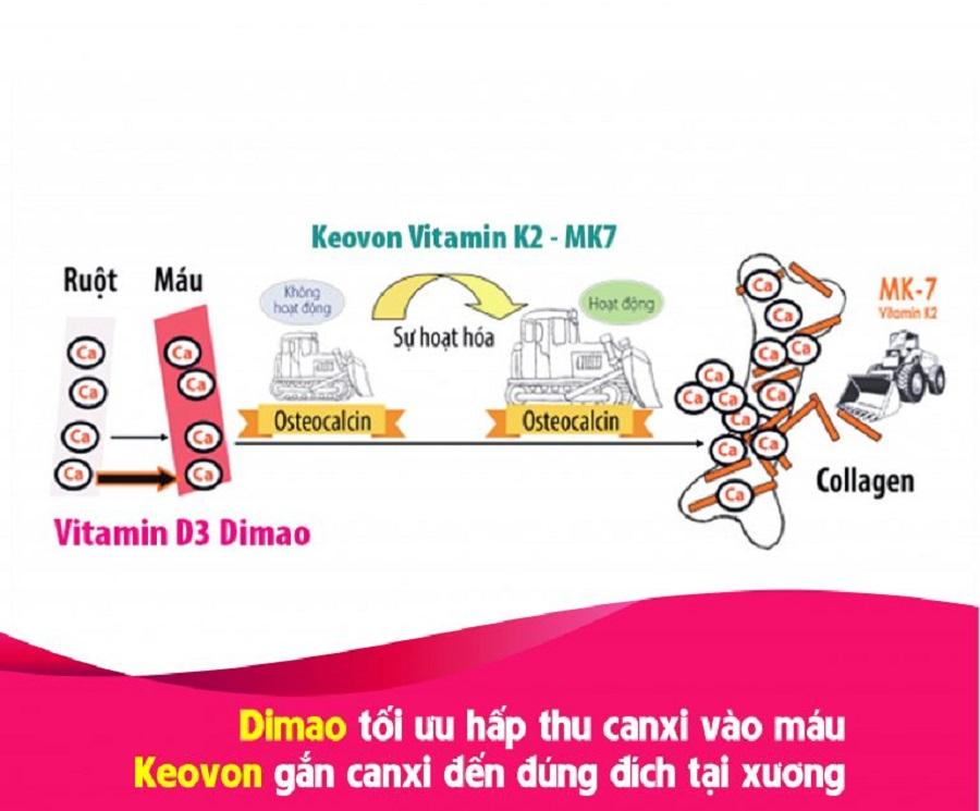 Vitamin K2 giúp tăng cường mật độ xương, hỗ trợ tăng chiều cao vượt trội