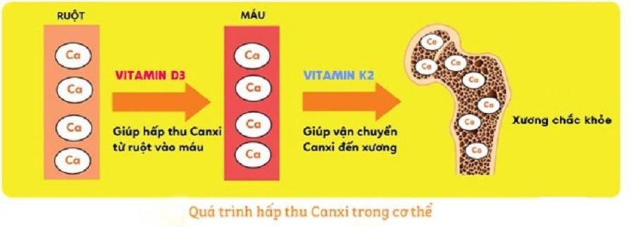 vitamin d3 và vitamin k2 thúc đẩy hấp thu canxi và tăng chiều cao hiệu quả