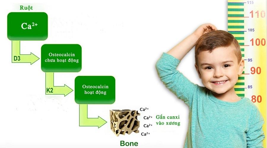 Bổ sung vitamin D và vitamin K2 giúp tăng cường mật độ xương, hỗ trợ phát triển chiều cao